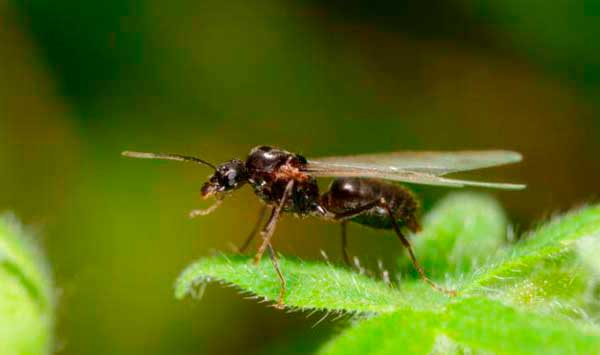 How To Get Rid Of Flying Ants 5 Best Ant Control Products In 2020