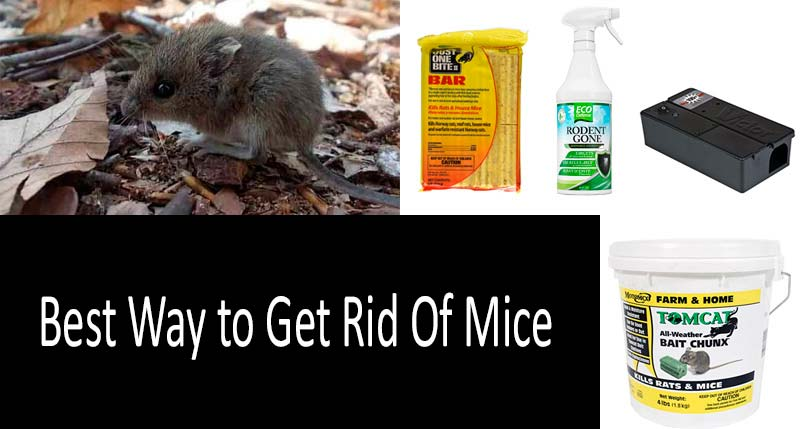 Best Way To Get Rid Of Mice The Best Mouse Killers And Traps 2021