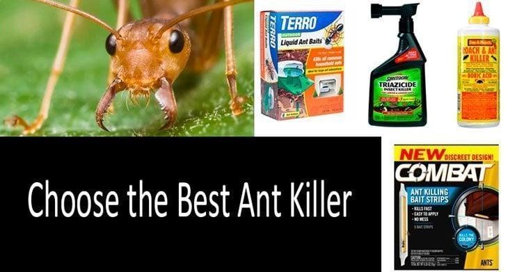 Top 20 Best Ant Killers In 2020 Buyer S Guide