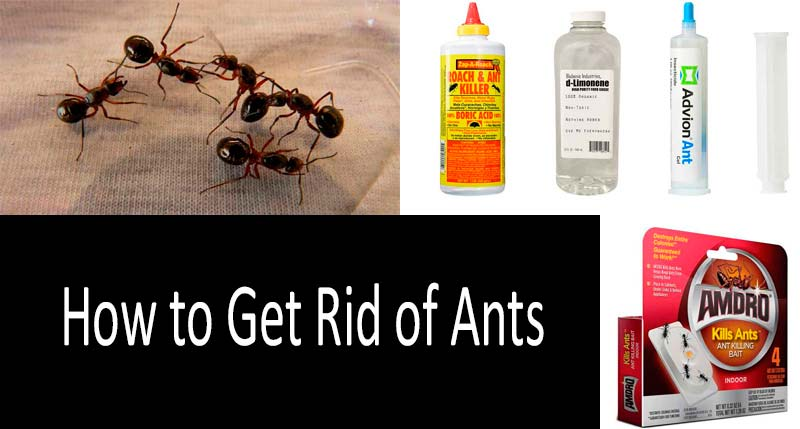 How To Get Rid Of Ants Best Ways To Kill Ants Indoors And Outdoors