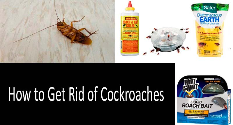 How To Get Rid Of Roaches Best Ways In 2020 Buyer S Guide